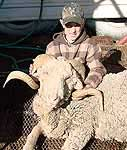 exotic merino hunting in the rolling mesquite brush of texas