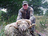 Hunting for Merino in Texas