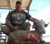 Merino ram shot with pistol in the Hill Country