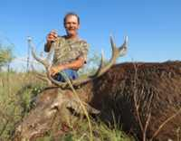 red stag hunt in Mason, TX