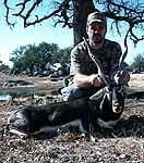 Hunting Trophy Blackbuck Antelope in the texas hill country