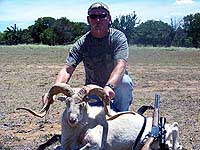 Texas Dall Hunt in Texas Hill Country