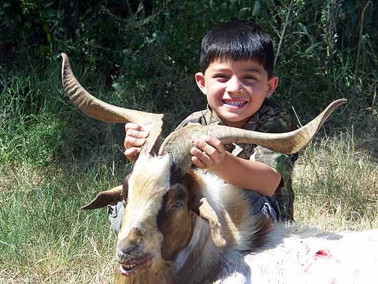 Youth catalina goat hunt