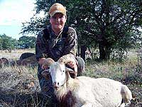 Texas Dall Hunts in the Rocky Hills of The Wildlife Ranch
