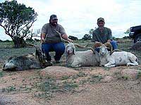 Group Hunts in the Rocky terrain of Texas