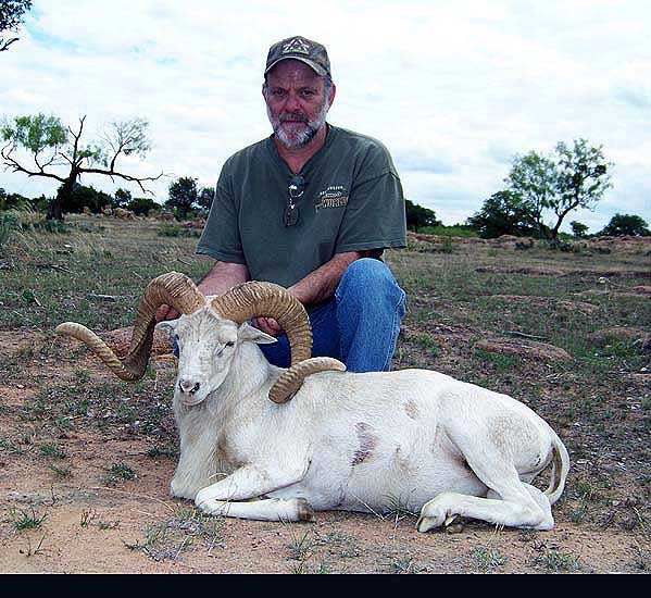 Exotic Ram Hunts at The Wildlife Ranch