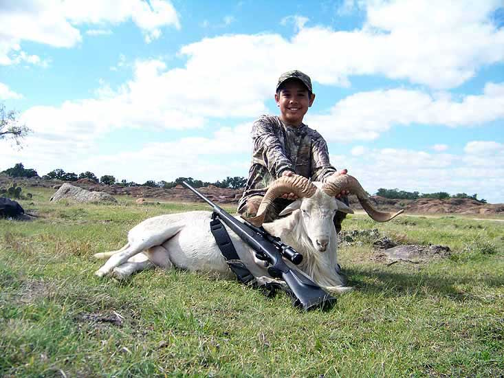 Trophy Exotic Ram hunts at The Wildlife Ranch in Mason Texas