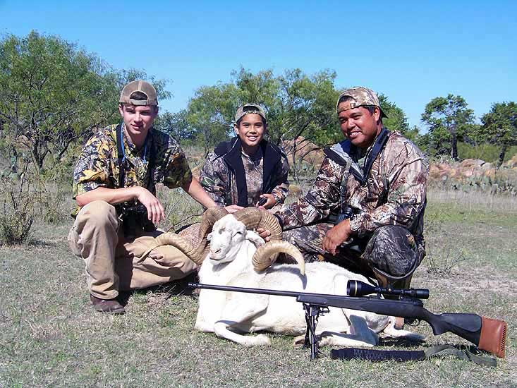 Trophy Gold Metal Class Exotic Texas Dall Ram Hunts in the mesquite brush of Central Texas