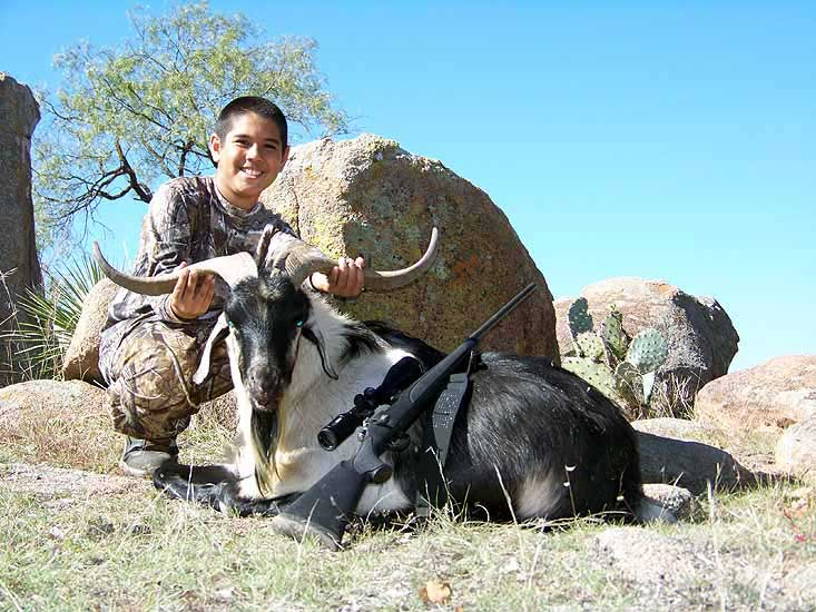Hunting Trophy Catalina goats in the Rolling hills of South Texas