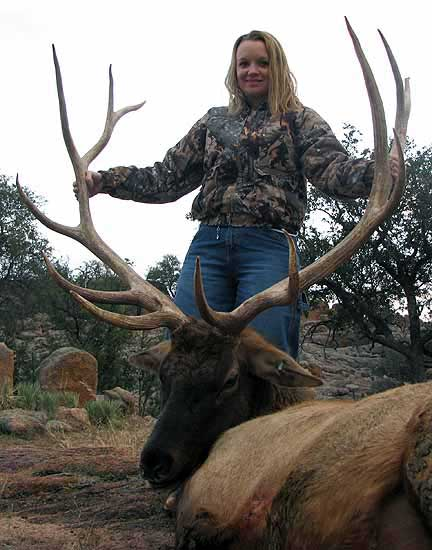 Trophy Elk hunts in the Texas hill country