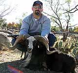 Hunting a painted desert ram in the tx hill country