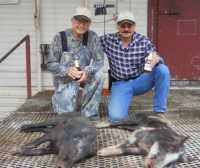 meat hog hunt in hill country