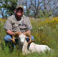 Texas Dall ram hunt call for pricing