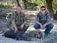 wild hogs at hog hill in Mason, TX hunt