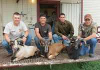 exotic ram hunt group hunt corsicans and black hawaiians