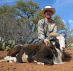 hill country hunt painted desert ram