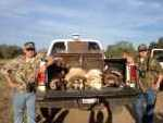 Texas Slam hunt for exotic rams in Mason, Tx