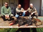 Hogs Wild Hog pig duroc boar wildlife ranch exotic hunts hunting hunters shooting guns