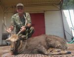 Sika Deer wildlife ranch mason tx hillcountry hunting hunts wild hunter