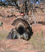 turkey hunting call for details!