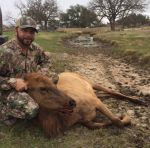 elk cow hunt mason, tx rocks hill country