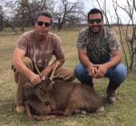 sika deer hunting buck mason texas