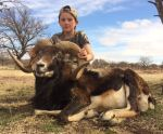mouflon hunt call for details!