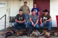 wild hogs killed by group in the hill country