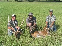 Axis, Mouflon, and Black Buck