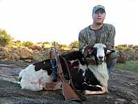Hunting an Exotic Painted Desert Ram in the Granite Rocks that fill the texas hill country
