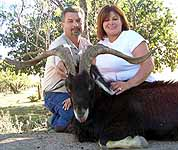 Spanish Goat Hunts in the cactus filled country of texas